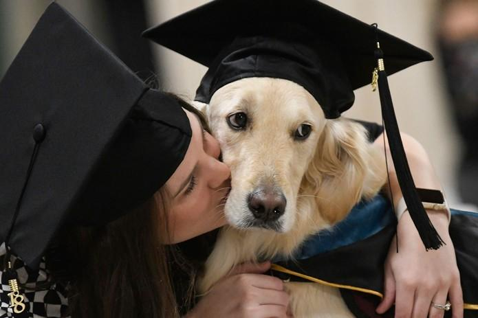Cão recebe diploma honorário de universidade nos EUA por ajudar aluna cadeirante