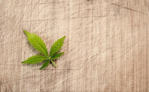 Cresce prescrição médica da Cannabis