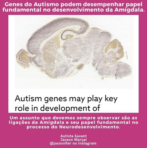 Um assunto que devemos sempre observar são as ligações da Amígdala e seu papel fundamental  processo neural